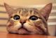 薛定谔的猫